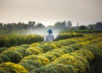 produção rural